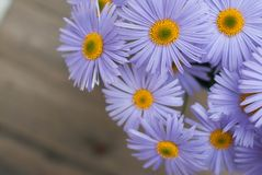 Espaço de madeira rústico da cópia do fundo do ramalhete de Violet Purple Daisy Chrysanthemum Chamomile imagem de stock royalty free