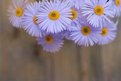 Espaço de madeira rústico da cópia do fundo do ramalhete de Violet Purple Daisy Chrysanthemum Chamomile imagem de stock