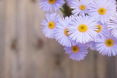 Espaço de madeira rústico da cópia do fundo do ramalhete de Violet Purple Daisy Chrysanthemum Chamomile foto de stock