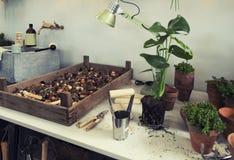 Espaço do jardim no terraço home Fotos de Stock Royalty Free