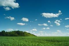 Espaço do russo Os campos verdes da região de Saratov sob o céu azul e as nuvens bonitas Foto de Stock Royalty Free