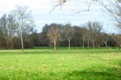 Espaço ensolarado grande, com uma fileira da árvore sem folhas Fotografia de Stock Royalty Free