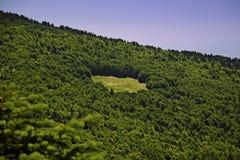 Espaço vazio na floresta do pinho fotografia de stock royalty free