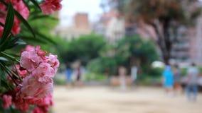 España Cataluña Barcelona Antoni Gaudi Sagrada Familia Cathedral y flor rosada almacen de video
