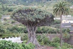 España, Tenerife, Icod de los Vinos Imagenes de archivo