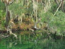 Español Moss Draped Trees en el banco de la corriente meridional Fotografía de archivo