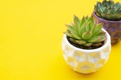 Espa?o de trabalho denominado Plantas suculentos da flor de Echeveria no fundo amarelo Copie o espa?o Configura??o lisa, vista su fotos de stock
