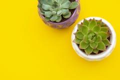 Espa?o de trabalho denominado Plantas suculentos da flor de Echeveria no fundo amarelo Copie o espa?o Configura??o lisa, vista su imagem de stock