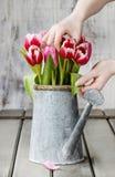 Espace de travail de fleuriste : femme s'chargeant du bouquet des tulipes Photos libres de droits