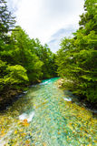 Espace libre Azusa River Downstream Forest de Kamikochi Photographie stock libre de droits