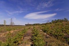 Espace libre dans la forêt Photo libre de droits