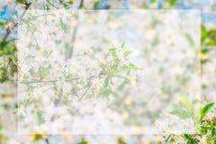espace vide blanc sur le pommier fleurissant Image libre de droits