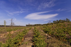 Espacio borrado en el bosque Foto de archivo libre de regalías