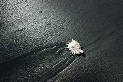 Espacio de la playa - 12 Fotografía de archivo