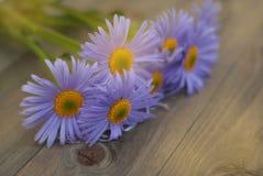 Espacio de madera rústico de la copia del fondo del ramo de Violet Purple Daisy Chrysanthemum Chamomile foto de archivo libre de regalías