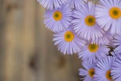 Espacio de madera rústico de la copia del fondo del ramo de Violet Purple Daisy Chrysanthemum Chamomile imagen de archivo