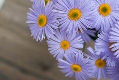 Espacio de madera rústico de la copia del fondo del ramo de Violet Purple Daisy Chrysanthemum Chamomile imagen de archivo libre de regalías