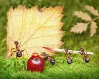 Espacio en blanco, personas de las hormigas que escriben la postal, trabajo en equipo Imagen de archivo libre de regalías