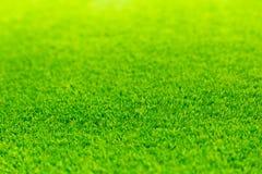 Espacio vacío del campo vivo brillante de la hierba verde imágenes de archivo libres de regalías