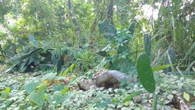 Espacio verde con los cactus Exploración urbana Fotos de archivo
