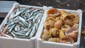 Espadín y caracoles de mar en el mercado de pescados Fotografía de archivo