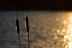 Espadañas por el agua de Sunkissed Foto de archivo