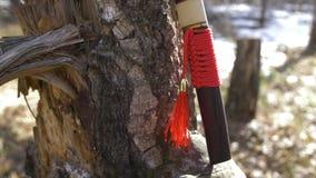 Espada corta del japonés con la borla roja que coloca el árbol cercano almacen de video