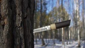 Espada japonesa tradicional en árbol en bosque del invierno metrajes