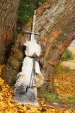 Espada perto da árvore imagem de stock royalty free