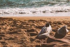 Espadrilles à la plage photographie stock