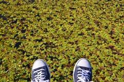 Espadrilles bleues contre l'étang vert Photo stock
