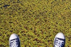Espadrilles bleues sur le fond vert de feuilles Photographie stock