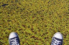 Espadrilles bleues sur le fond vert de feuilles Image libre de droits