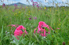Espadrilles dans l'herbe verte Images stock