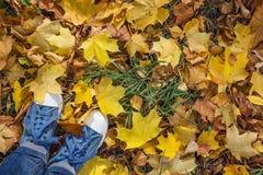 Espadrilles de denim avec les feuilles tombées jaunes d'érable Vue supérieure avec la Co Images libres de droits