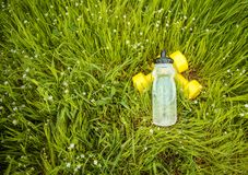 Espadrilles et forme physique d'haltères sur l'herbe verte Photo stock
