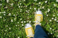 Espadrilles jaunes dans un domaine dasiy Première vue de personne Photo stock