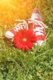 Espadrilles rouges avec la fleur Photos libres de droits