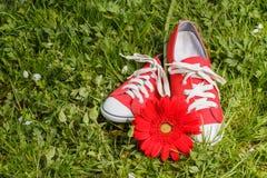 Espadrilles rouges avec la fleur de gerbera Photographie stock libre de droits