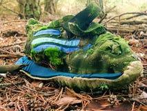 Espadrilles sur la forêt de pin Images stock
