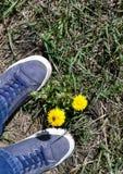 Espadrilles sur une herbe tout près un pissenlit Photo stock
