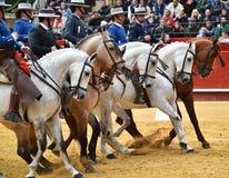 Espagnol de cheval dans le spectacle Image stock
