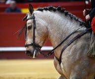 Espagnol de cheval dans le spectacle Photos libres de droits