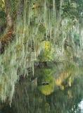 Espagnol Moss Draped Trees sur la banque du courant du sud Photo libre de droits
