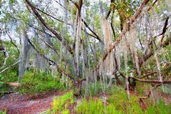 Espagnol Moss Everglades National Park photo libre de droits