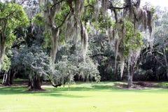 Espagnol Moss Hanging de Live Oak Trees Images libres de droits