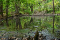 Espagnol Moss Swamp Photo stock