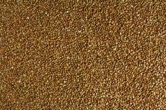 Espalhe o trigo mourisco, no fundo branco fotos de stock