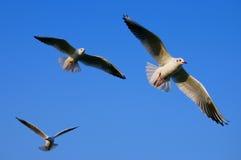 Espalhe suas asas Fotos de Stock Royalty Free