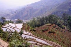 Espaliers de riz Images libres de droits